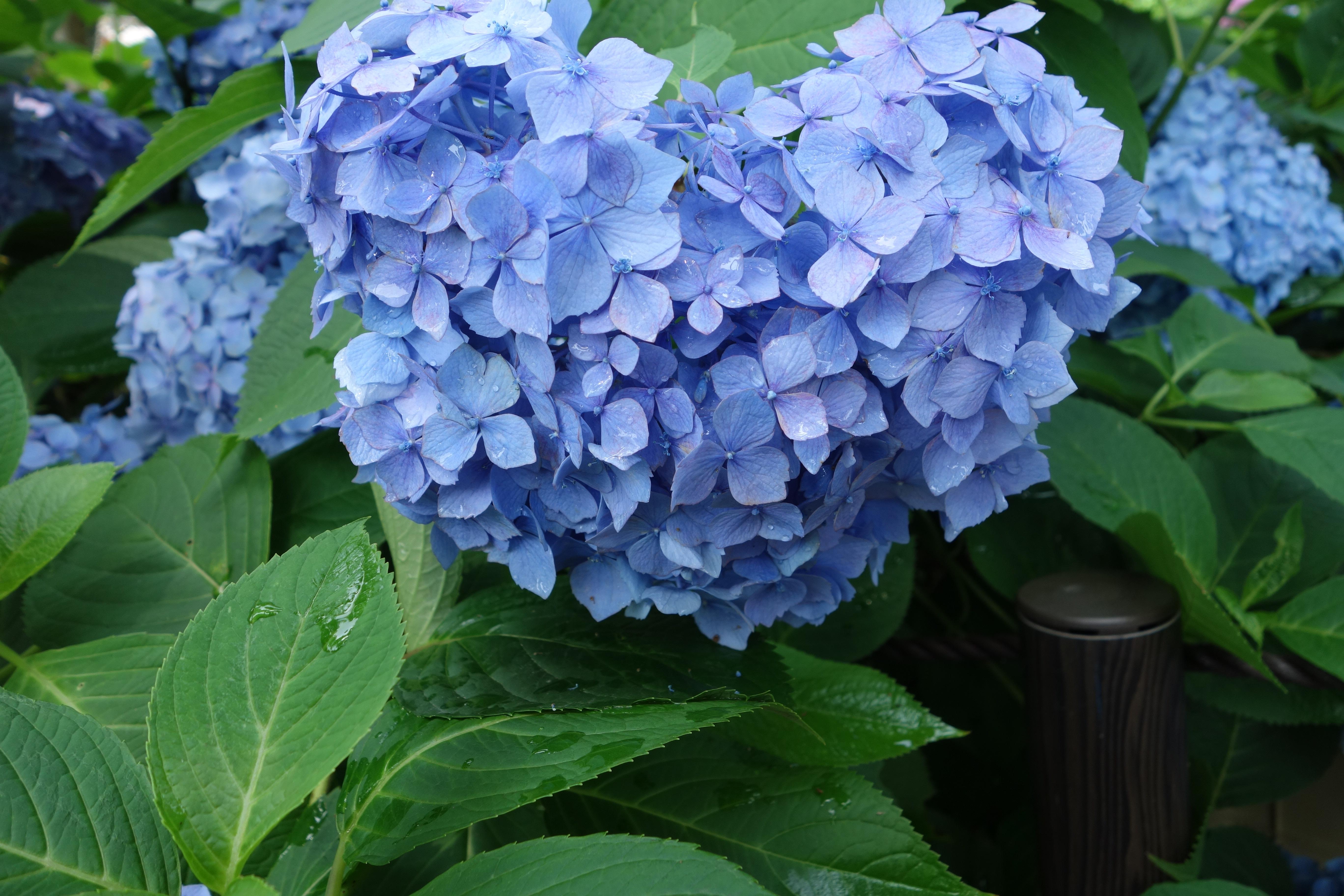 MY BLUE HEAVEN, aka A Flower orgy